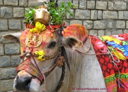 Pongal-Celebration-Andhra-Pradesh