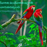 Telugu Text Quotes on Love - Free Download