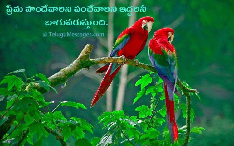 Beautiful Love Quote in Telugu