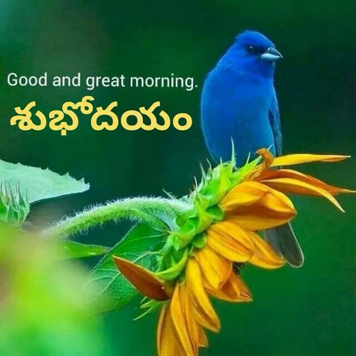 Good and Great Morning