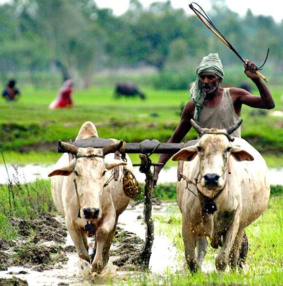 Indian Farmer Sad Story