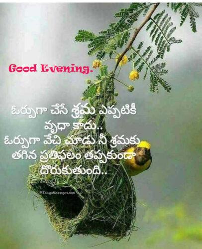 Telugu Patience Quote - Good Evening